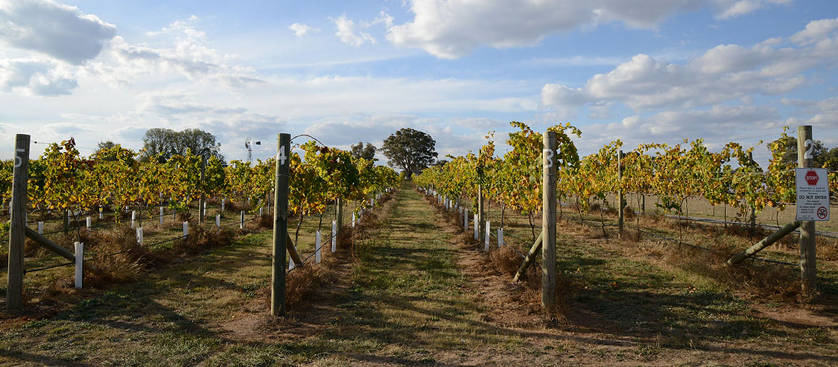 Murrumbateman Vineyard